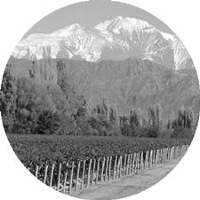 Paisaje tradicional del viñedo en el Oasis Norte de Mendoza, Argentina